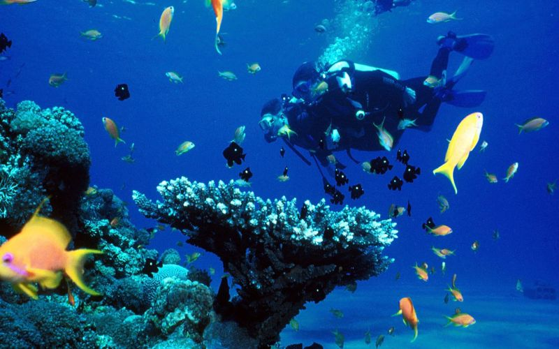Scuba diving holiday